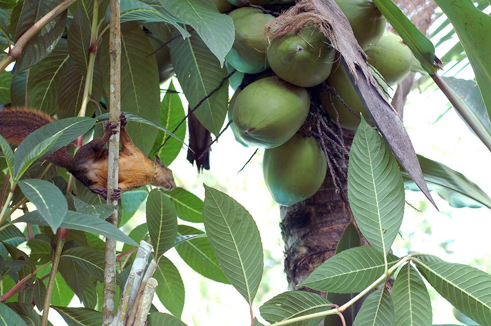 casa-renada-squirrel-in-garden