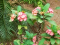 casa-renada-flowers-3-big