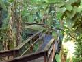casa-renada-garedn-tropical