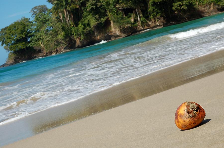 puerto-viejo-beach-coconuts