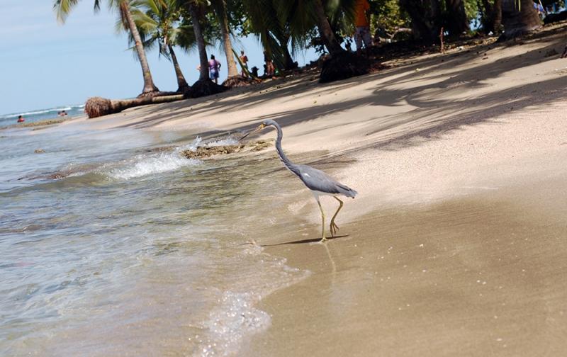 Casa-Renada-city-beach-puerto-viejo