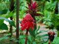 casa-renada-flowers-2-big