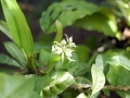 casa-renada-flowers-4-big